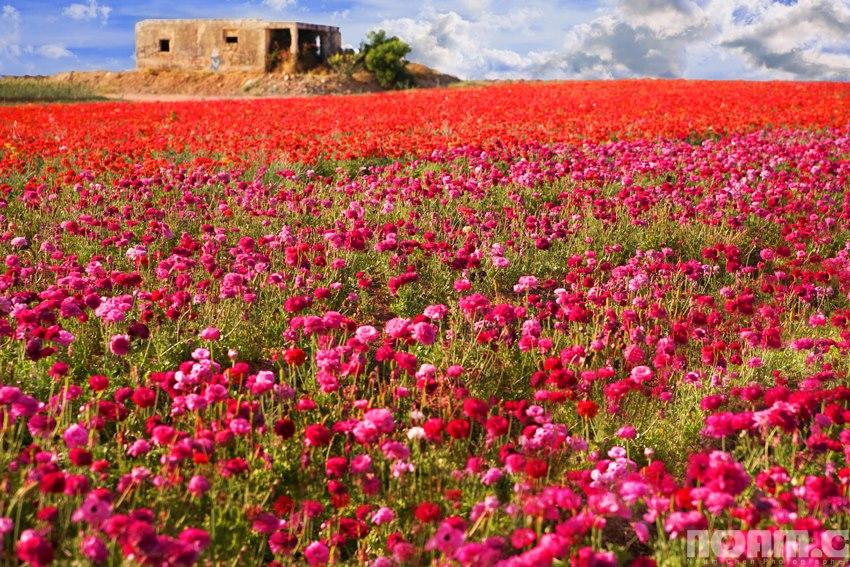 торжественно израиль картинки цветов новом году откроешь