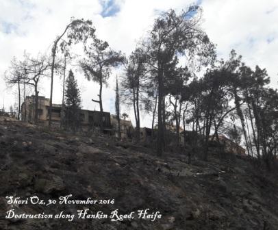 haifa-fires-30-nov-2016-hankin-road-c