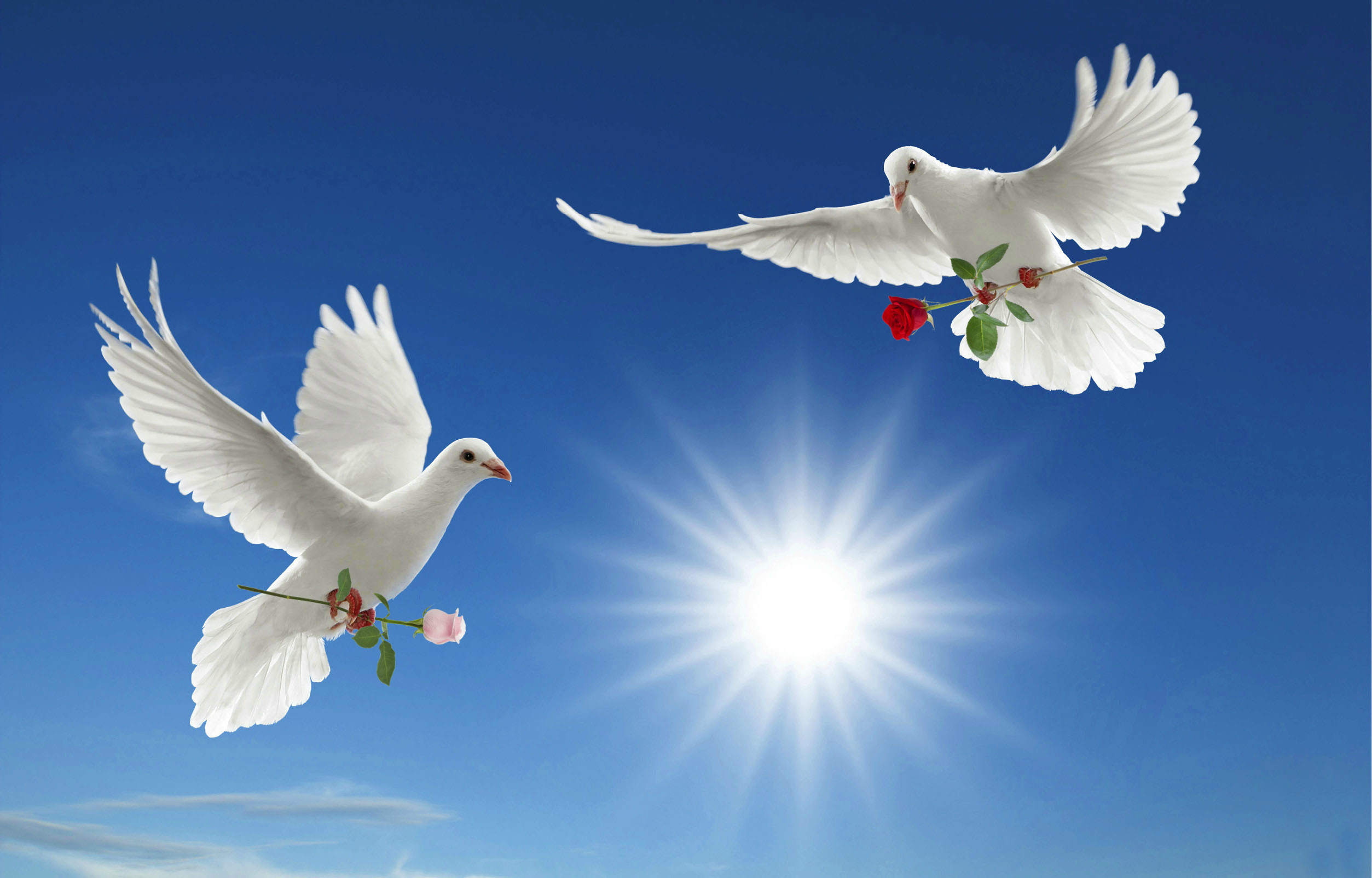 JYJSnEO World Peace Wallpaper