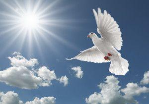bigstock-Pigeon-In-The-Sky-4865245